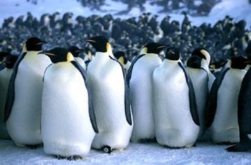I protagonisti del documentario La marcia dei pinguini