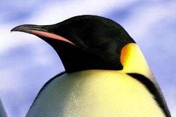 La marcia dei pinguini (2005)