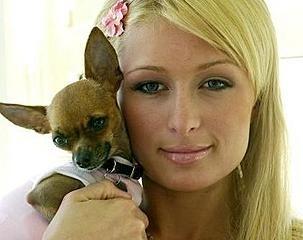 Un'immagine ormai classica di Paris Hilton con chihuahua