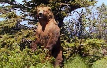 Una scena del documentario Grizzly Man (2005)