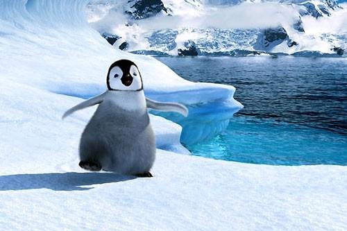 Uno dei piccoli protagonisti del film Happy Feet