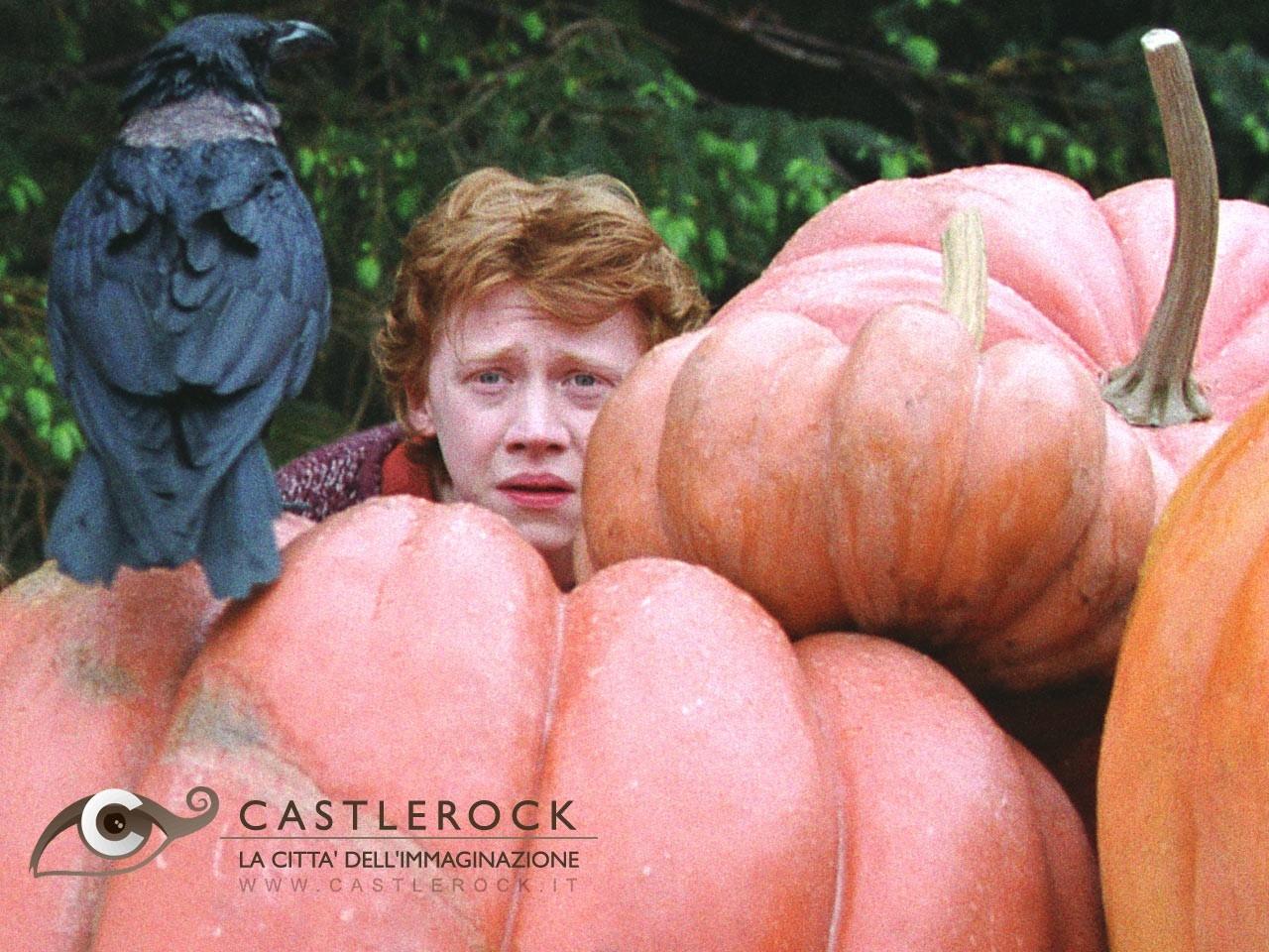 Wallpaper del film Harry Potter e il prigioniero di Azkaban con Rupert Grint seminascosto tra le zucche