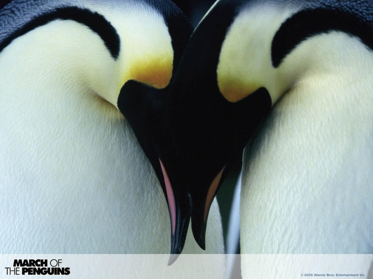 Wallpaper per il desktop del film La marcia dei pinguini