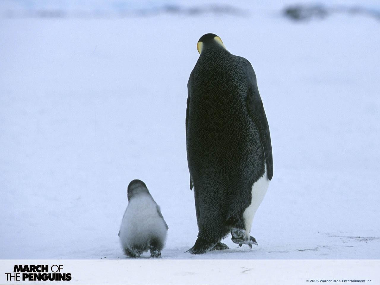 Un simpatico wallpaper del film La marcia dei pinguini