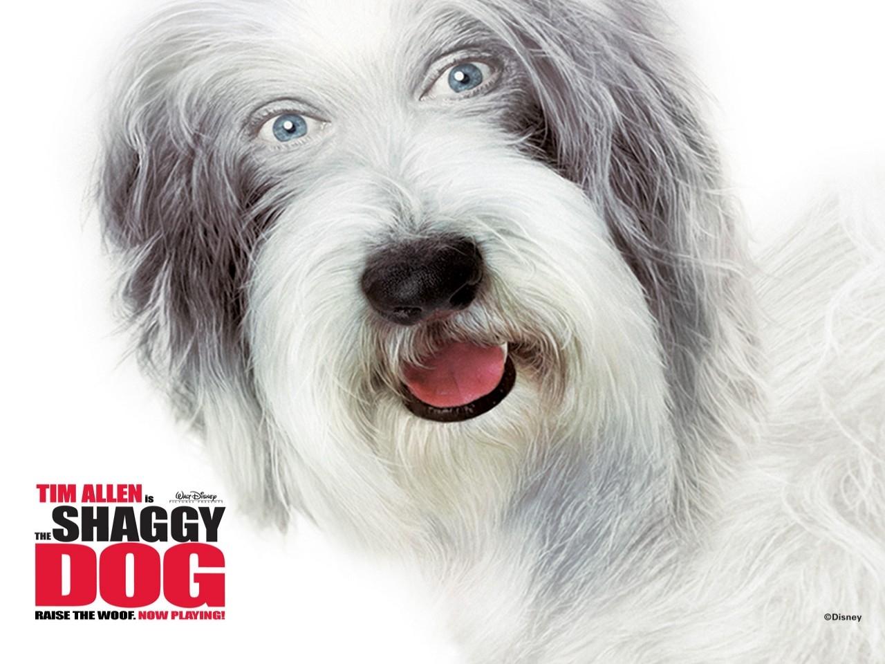 Wallpaper del film Shaggy Dog