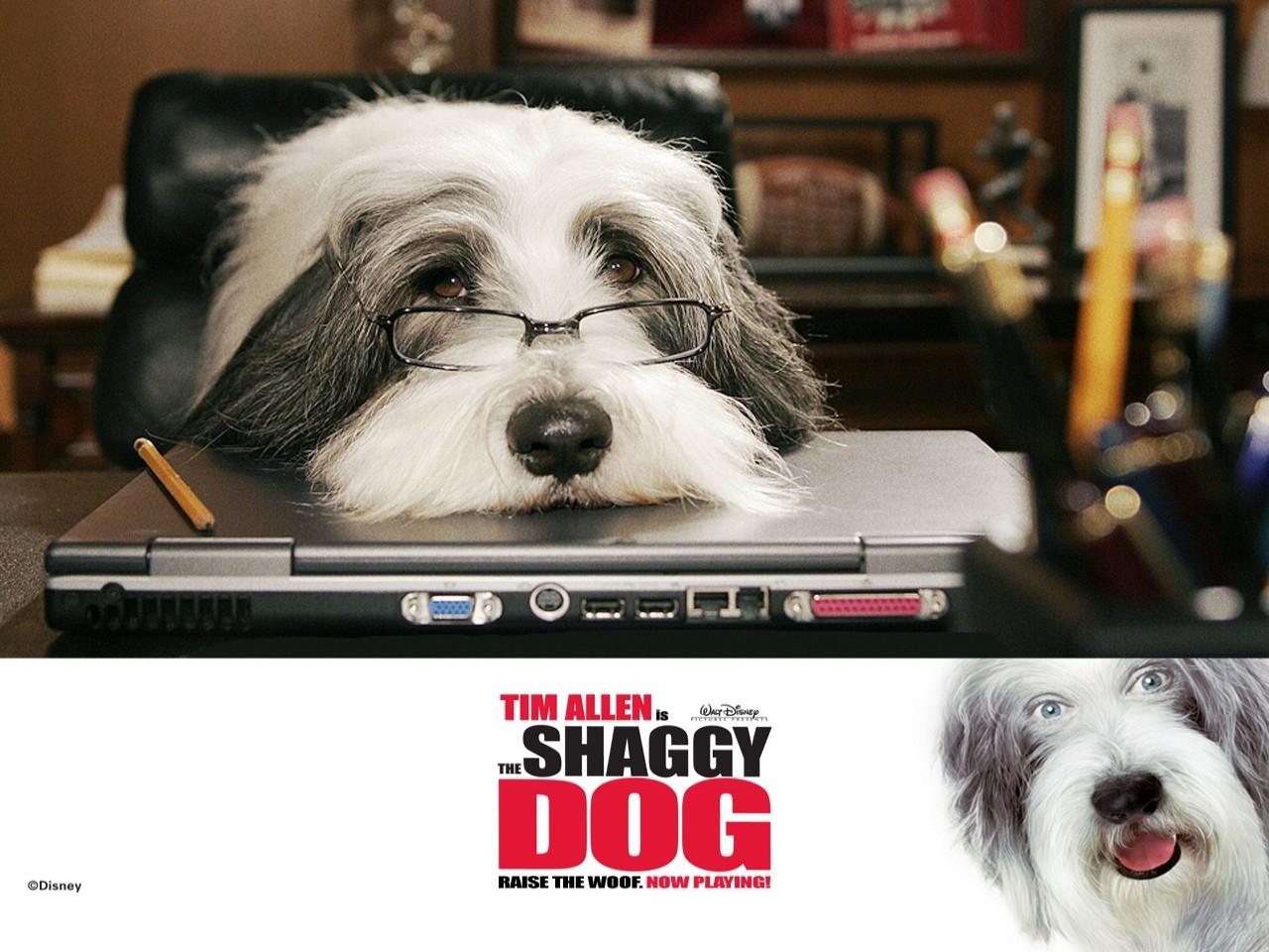 Wallpaper del film Shaggy Dog - Papà che abbaia... non morde