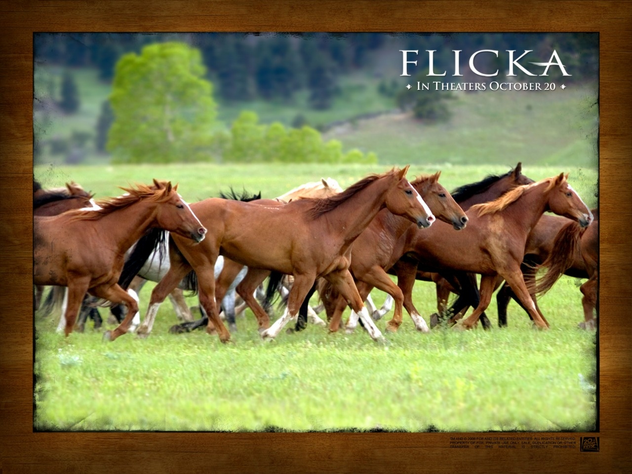 Wallpaper del film Flicka - Uno Spirito libero (2006)