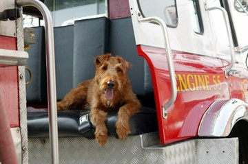 Una scena del film Il cane pompiere