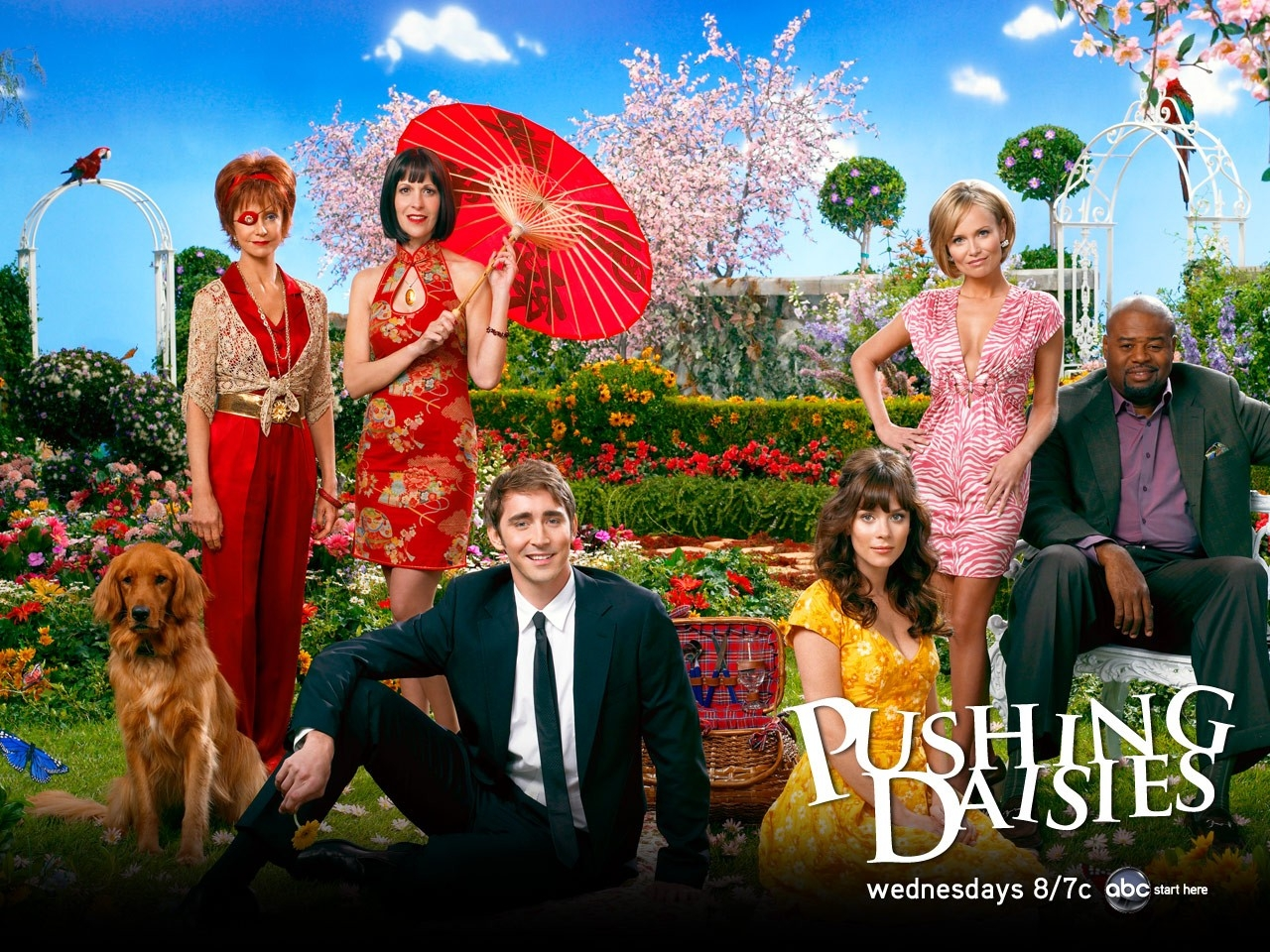 Wallpaper della serie tv Pushing Daisies