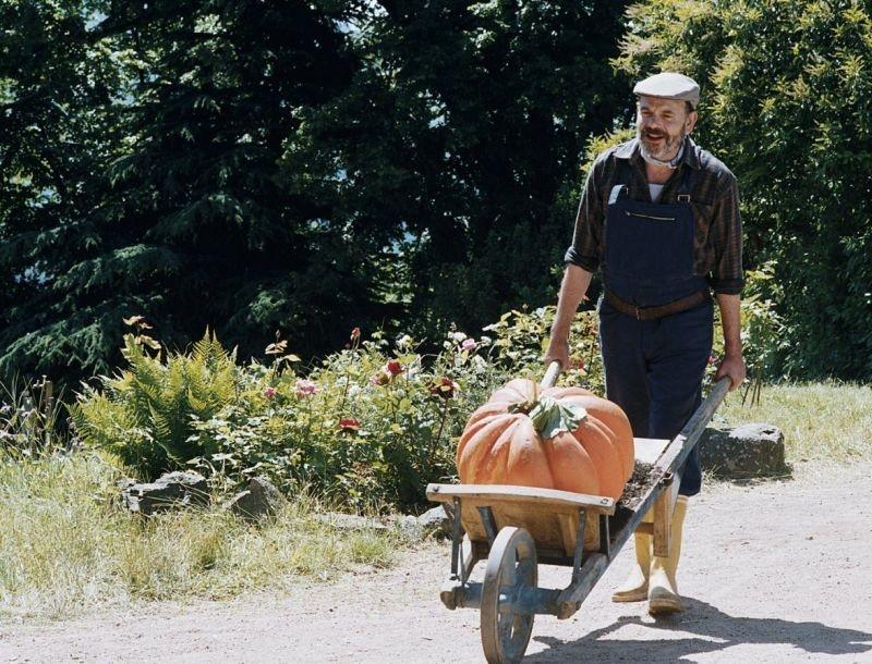 Una sequenza del film 'Il mio amico giardiniere'