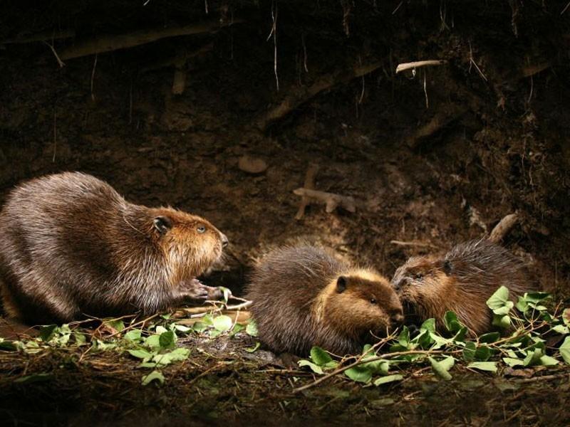 Una scena del film Mèche Blanche, les aventures du petit castor