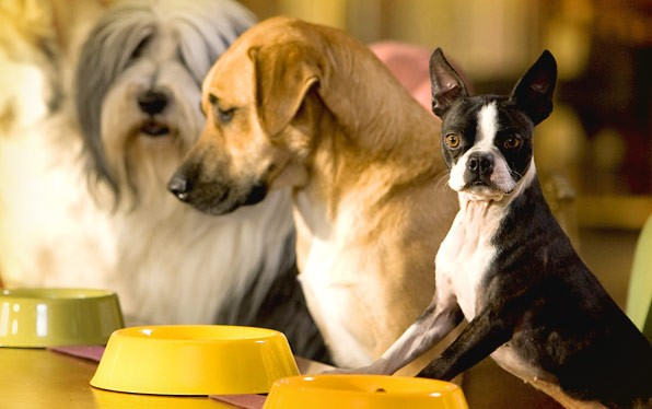 Tempo di cena per i cani di Hotel Bau