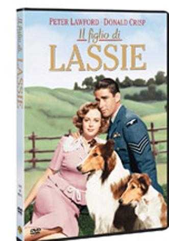 La copertina di Il figlio di Lassie (dvd)