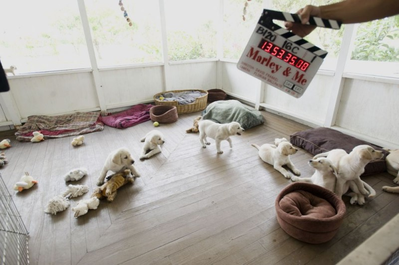 Una foto dal set del film Io & Marley