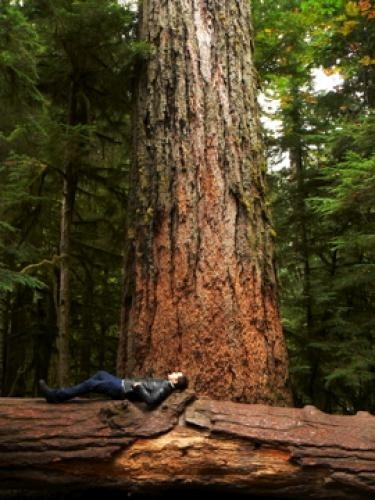 Viaggio alla scoperta della natura per Joshua Jackson in One Week