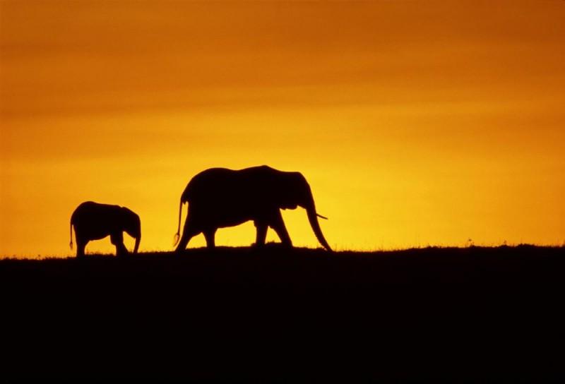 Un'immagine di due elefanti tratta dal documentario Earth - La nostra terra