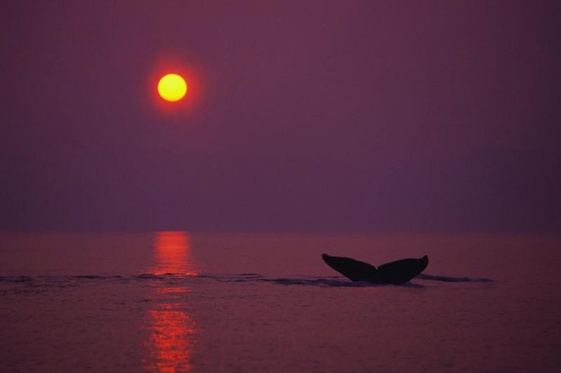 Una poetica immagine del documentario Earth - La nostra terra