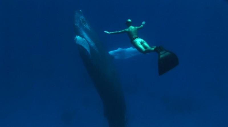 Un'immagine del documentario The Cove