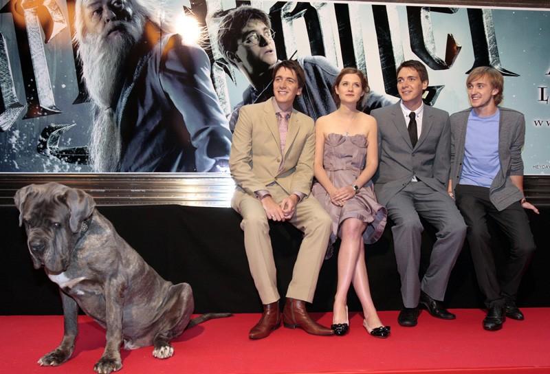 James e Oliver Phelps, Bonnie Wright, Tom Felton e il cane di Hagrid alla premiere francese di 'Harry Potter e il principe mezzosangue'