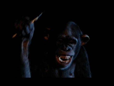 La simpatica scimmia Inga del film Phenomena (1985)