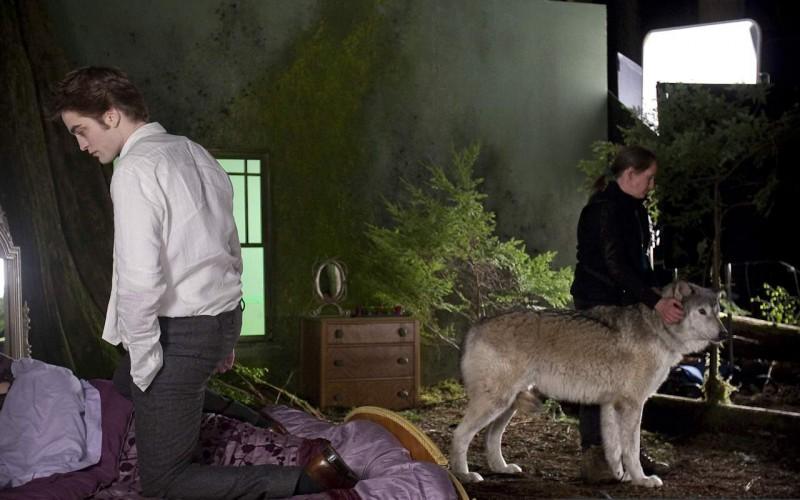 Robert Pattinson con un lupo bianco sul set di New Moon, secondo capitolo della saga di Twilight.