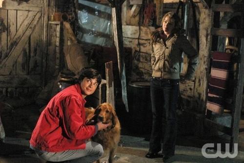 Tom Welling, Erica Durance e Shelby in una scena dell\'episodio Il segreto del passato di Smallville