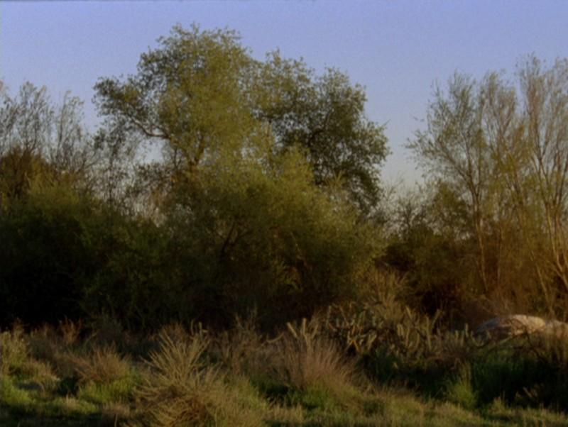 Una immagine di COMMON GROUND di Vera Brunner-Song (USA, 2008)