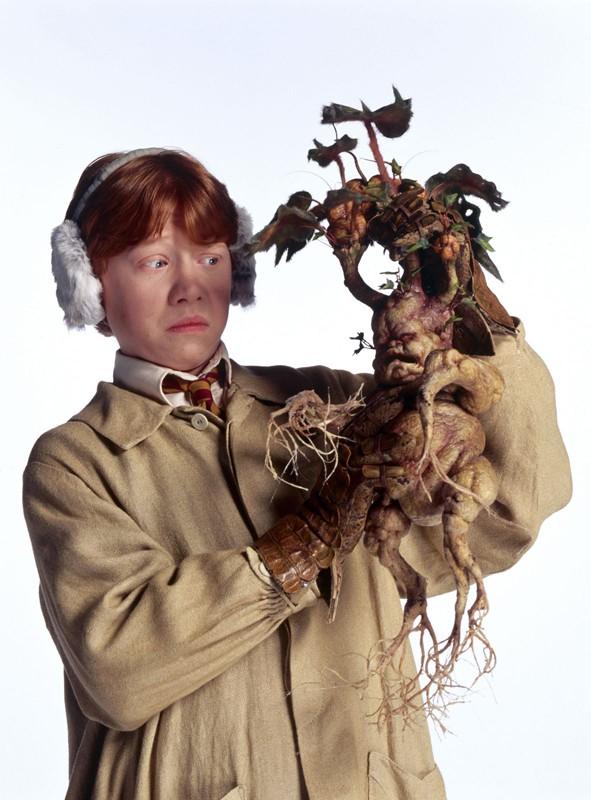Ron (Rupert Grint) e con una Mandragola in una foto promo del film Harry Potter e la Camera dei Segreti