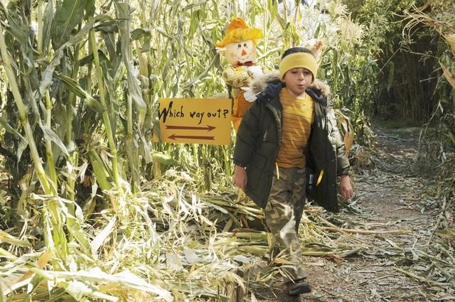 The Middle: Atticus Shaffer nell'episodio Thanksgiving