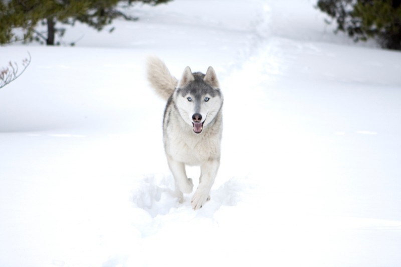 Il cucciolo Buck in un'immagine del film Il richiamo della foresta 3D