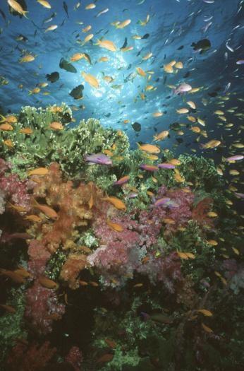 Un'immagine del film Oceani 3D