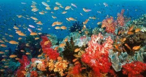 Un'immagine della barriera corallina dal film Oceani 3D