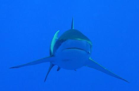 Una creatura pericolosa dal film Oceani 3D