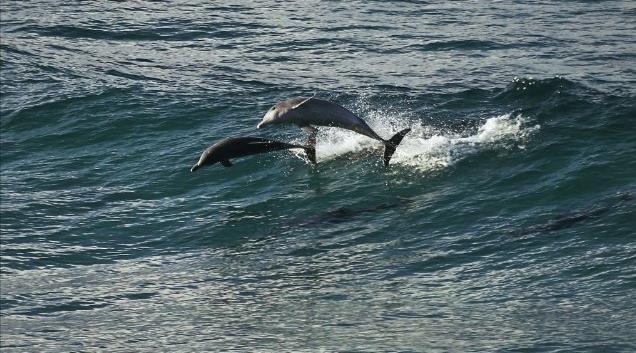 I delfini ballano tra le onde in Oceans