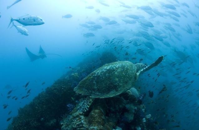 Una scena del film Oceans