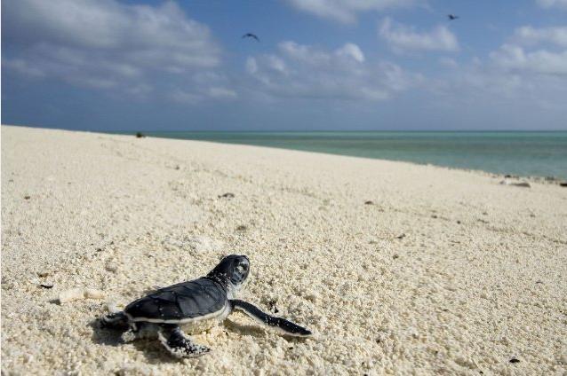 Una tartaruga marina scruta l'orizzonte nel film Oceans