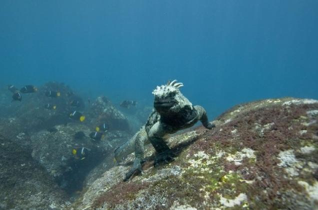 Uno dei protagonisti del film Oceans