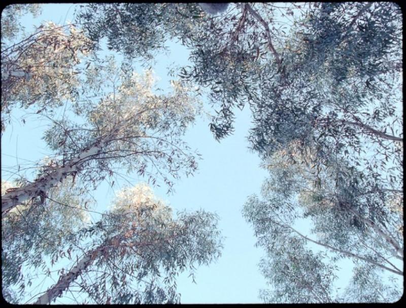 Una splendida immagine tratta dal film Le quattro volte