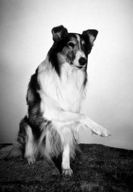 Lassie in una foto promozionale della serie.