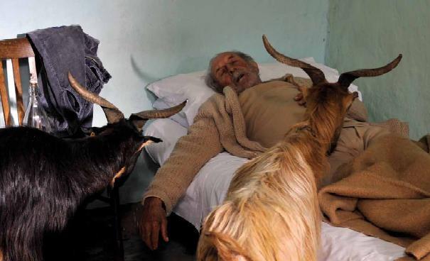 Il pastore con le sue amiche capre nel film Le quattro volte