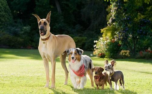 Sansone e i suoi amici a quattro zampe nel film Sansone
