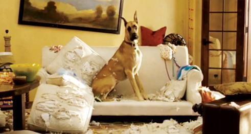 Sansone, il cane più pasticcione del cinema nel film Sansone