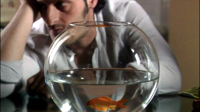 Fabio Troiano in Goodbye Mr.Zeus!