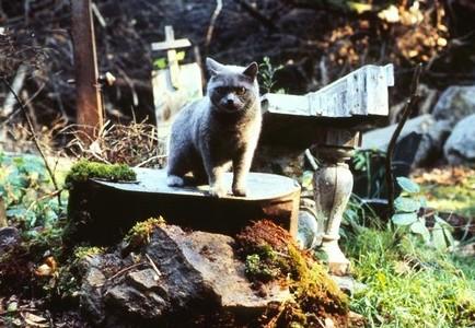 Il gatto Church nel film Cimitero Vivente - Pet Sematary