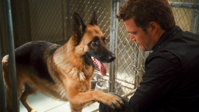 Chris O'Donnell in una sequenza di Cats & Dogs: The Revenge of Kitty Galore