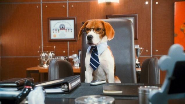 Lou, il cane intellettuale della commedia Cats & Dogs: The Revenge of Kitty Galore