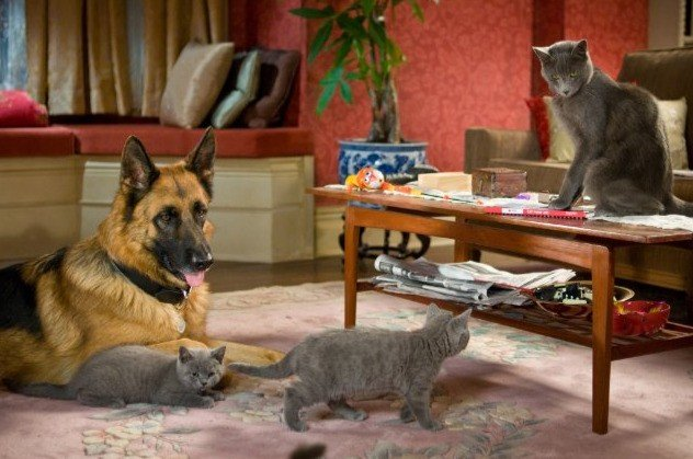 Quattro simpatiche canaglie di Cats & Dogs: The Revenge of Kitty Galore