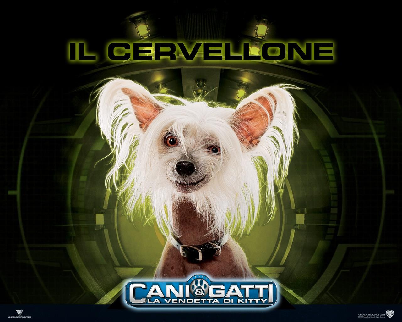Il poster di Peek per Cats & Dogs: The Revenge of Kitty Galore