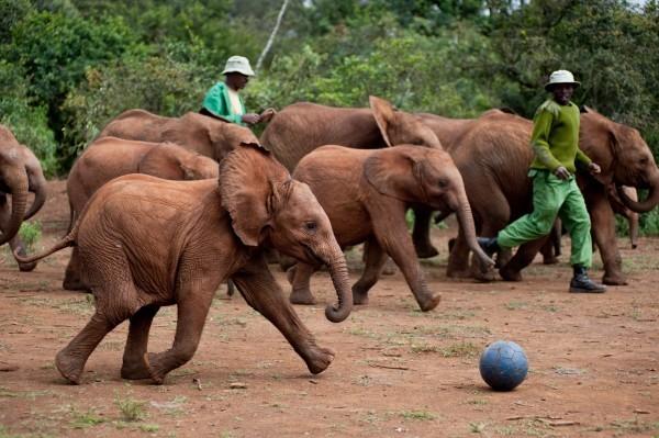 Focus sugli elefanti di Born to Be Wild 3D