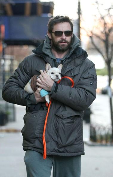 Hugh Jackman porta il suo nuovo cucciolo di famiglia, di nome Mocha, a fare una passeggiata